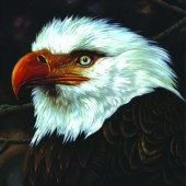 Mogwai - Hawk Is Howling Vinyl LP