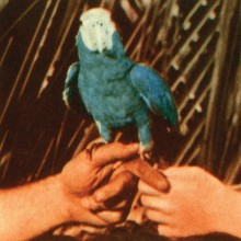 Andrew Bird - Are You Serious LP
